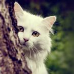 Chú mèo kiêu hãnh