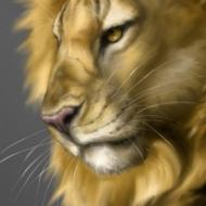 Âm mưu của sư tử