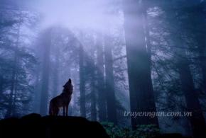 Chó sói và lòng tin khờ dại
