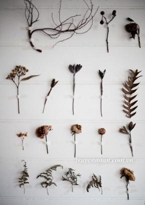 Những cánh hoa trên tường