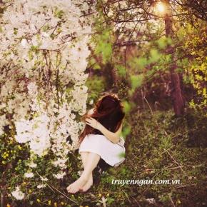 Hoa bên kia đồi