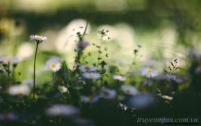 Mùa xuân đẹp nhất