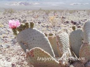 Sa Mạc và Xương Rồng