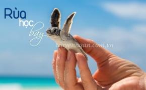 Rùa học bay