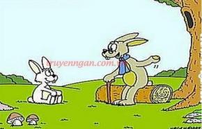 Thỏ thay răng