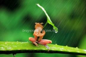 Câu chuyện về chú ếch (Sức mạnh của lời nói)