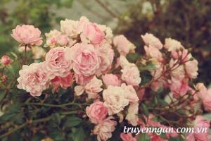 Cành hồng có gai
