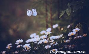 Những lá thư bướm trắng