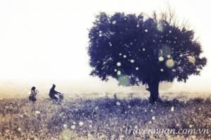 Những ký ức đã cũ