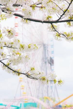 Có một mùa hoa trở về