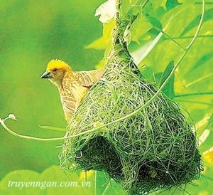 Những mùa chim làm tổ