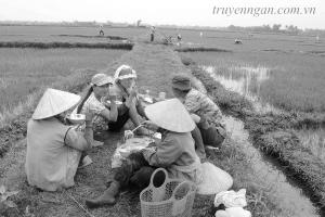 Bát cơm vội ngoài đồng