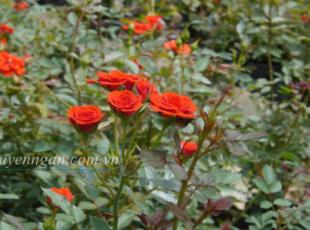 Hoa yêu