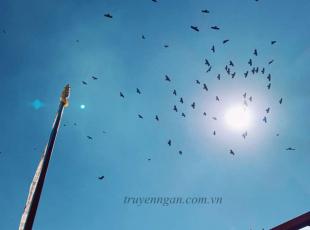 Những cánh chim ngang trời